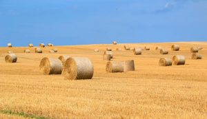 Hay Bales Straw