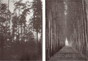 "Illegible natural vs, legible ""scientific"" forests"
